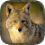 Coyote Hunting Calls file APK Free for PC, smart TV Download