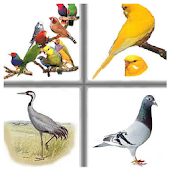 Kids Memory Game Birds