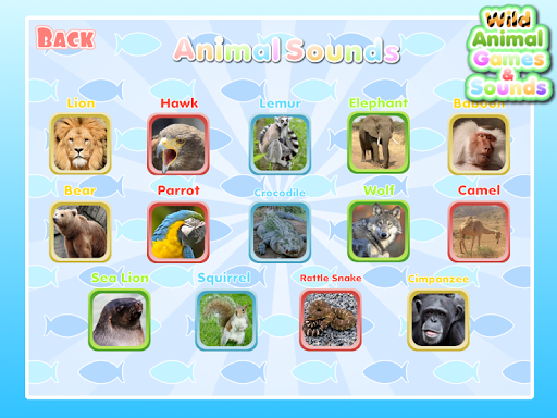 Wild Animal Games Sounds