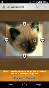 Cat Wallpapers! - screenshot thumbnail