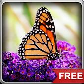 Flying Butterflies LWP