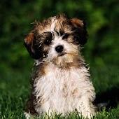 3D lovely dog 6