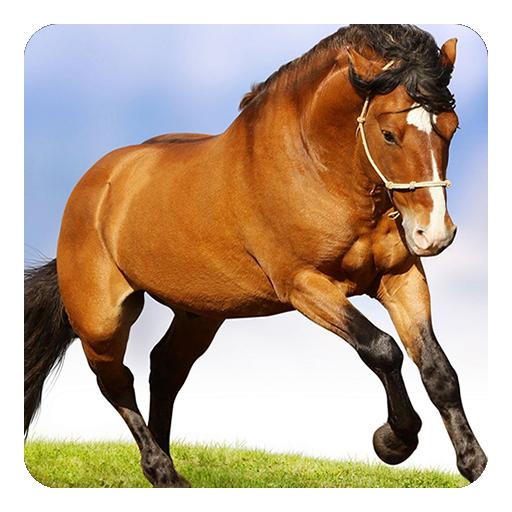馬は壁紙を生きる 個人化 App LOGO-APP試玩