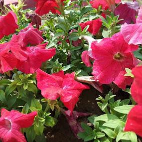 Good morning by Shailesh Chauhan - Flowers Single Flower