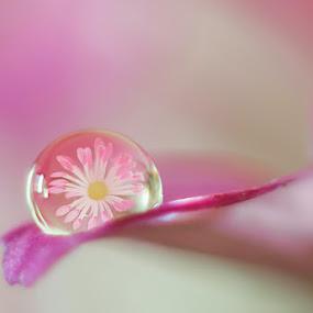 Drop by Dragana Trajkovic - Nature Up Close Natural Waterdrops ( nature, serbia, belgrade, drop, flower )