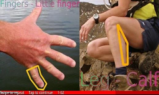 Parts of the Body 2 FREE- screenshot thumbnail