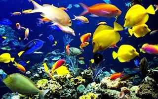 Screenshot of Underwater Jigsaw Puzzles