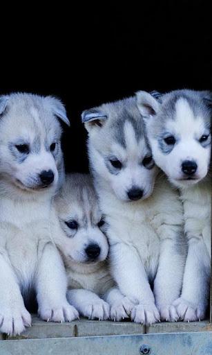 Cute Dog Puppy wallpaper