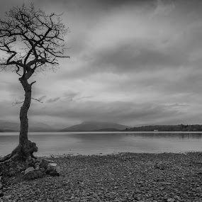 Sentinel by Andrew Magee - Black & White Landscapes