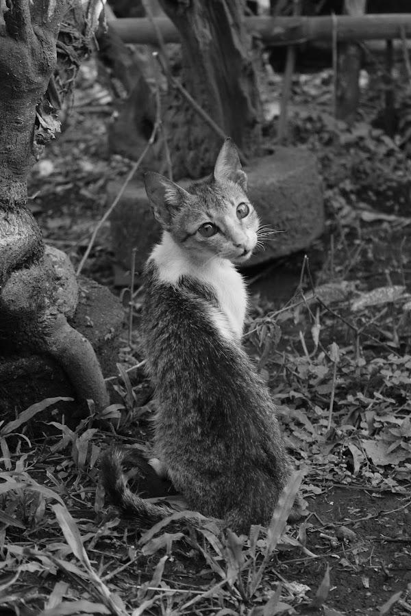 The Photogenic Cat by Jayvee Joshua Dela Cruz - Animals - Cats Portraits ( cats, photogenic, animals, cat, black and white, cute, photography, portrait, animal )