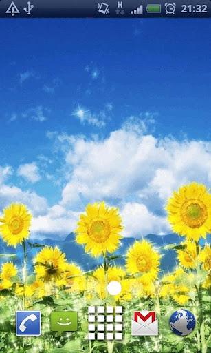 Summer Sunflowers Live Wallpap