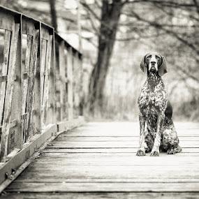 Cambria...my best friend by Hanna Králíková - Animals - Dogs Portraits
