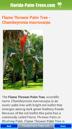 【免費生活App】Florida Palm Trees-APP點子