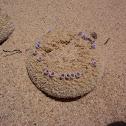 Sandfood