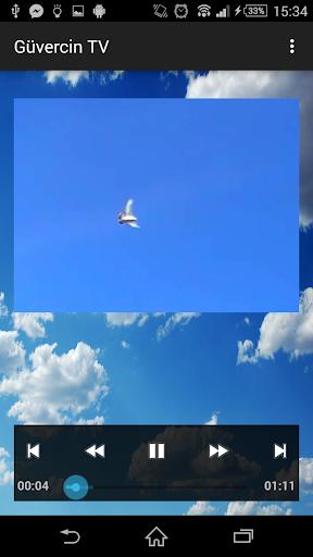 Pigeon TV