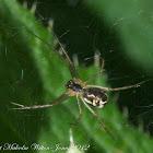 Money Spider