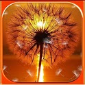 Dandelion Galaxy LWP Free icon