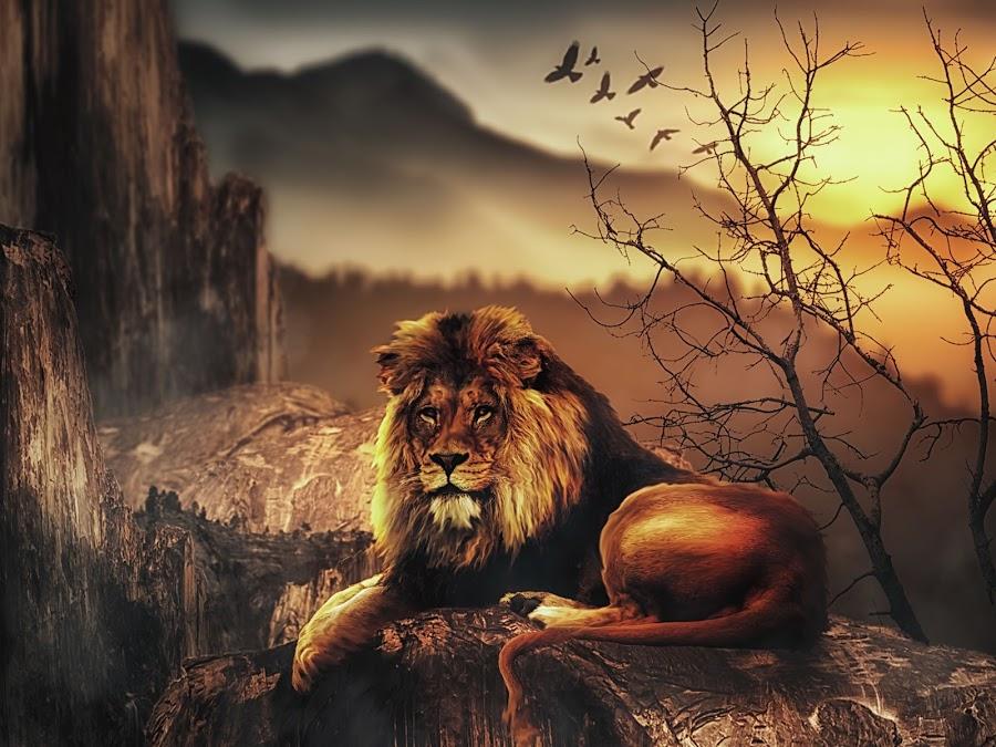 Lion Mountain by Karazy Shooke - Digital Art Animals ( lion, mountain, yosemite, digital art, manipulation )