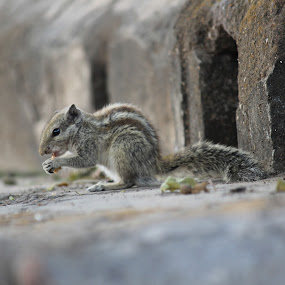 A Squirrel having meal...:) by HeartMonster Ankush - Animals Other ( #squirrel #meal )