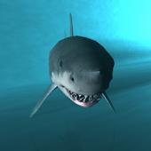 Shark Cage Dive 3D