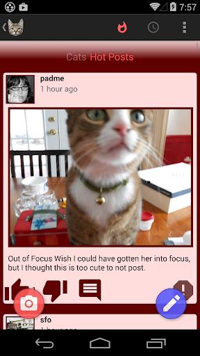 Cat Share