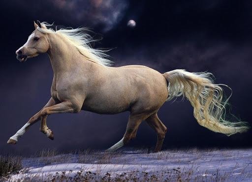 【免費個人化App】Horse Wallpapers app-APP點子