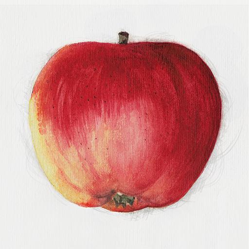 Äppelappen LOGO-APP點子