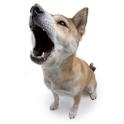 Bark Dog Bark! logo