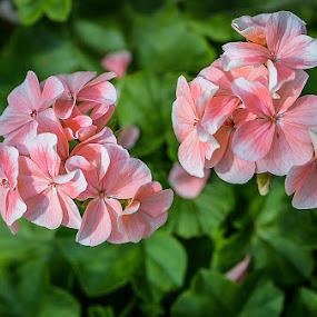 together ... by May Myat Kyaw - Flowers Flower Gardens ( love, heart, dream, art, flowers )