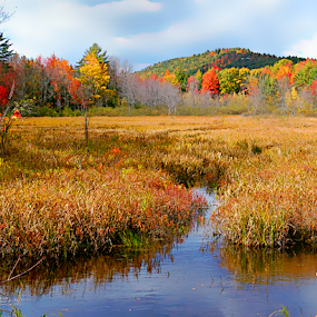 by Robin Amaral - Landscapes Prairies, Meadows & Fields ( stream, mountains, maple trees, nature, wetlands, autumn, color, colorful, fall, marsh, new hampshire,  )