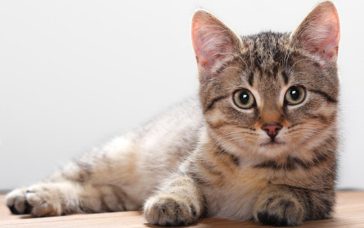 Cat Videos HD