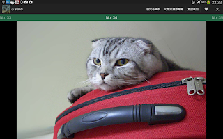 Screenshot of Scottish Fold Cat Wallpaper