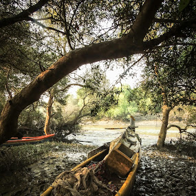 The road less taken by Amol Patil - Landscapes Forests ( wetland, india, forest, boat )
