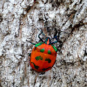 Cotton Harlequin Bug