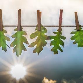 Après la pluie, le beau temps... by Manon Rousseau - Artistic Objects Other Objects ( blue, oak, green, clothes pins, cloud, cord, leaves, sun )