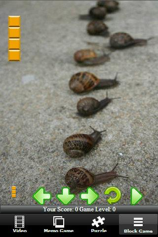 Turbo Racing Snail