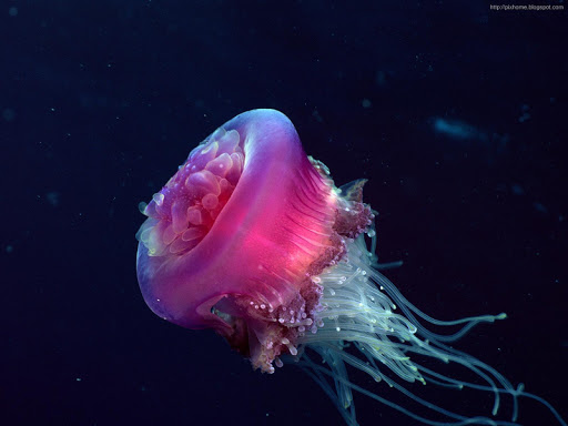 Sea Creatures Wallpaper HD