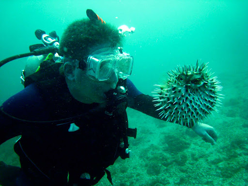 A scuba diver face to face with a puffer fish near Puerto Vallarta, Mexico.