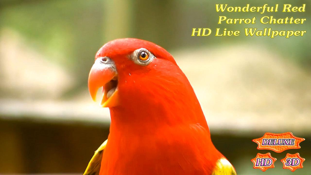 Wonderful Red Parrot Chatter- screenshot