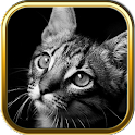 Cute Cat Puzzle Games icon