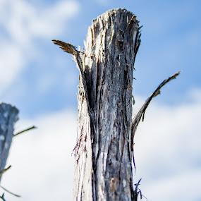 Aging Wood by Malan Lombard - Abstract Macro ( broken, old, stick, pole, wood, peeling )