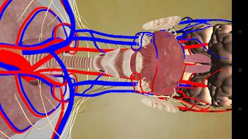 Screenshot of Human Anatomy RA