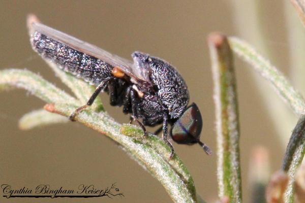 Window Fly