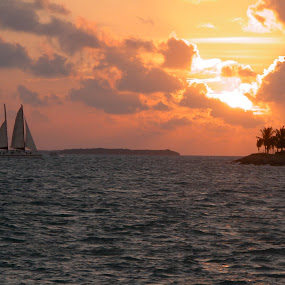 Sailboat Key West by Priscilla Capelle-Haehn - Transportation Boats ( water, sailing, sunset, ocean, transportation, key west, sailboat, device )