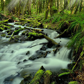 Streams N Beams! by Todd Ivanhoe - Landscapes Waterscapes