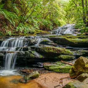 Leura Cascades by Carley Reed - Landscapes Waterscapes ( water, green, waterfall, australia, cascades, forest, blue mountains )