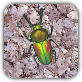 Stag beetle Live Wallpaper