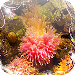 Sea anemone Jigsaw Puzzles