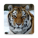 Big cats icon