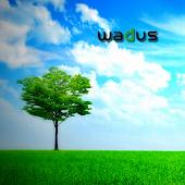 Wadus Analyse WP